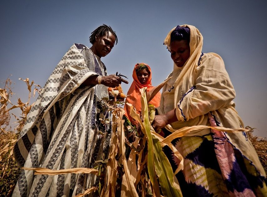 Europe's Anti-GMO Stance Is Killing Africans