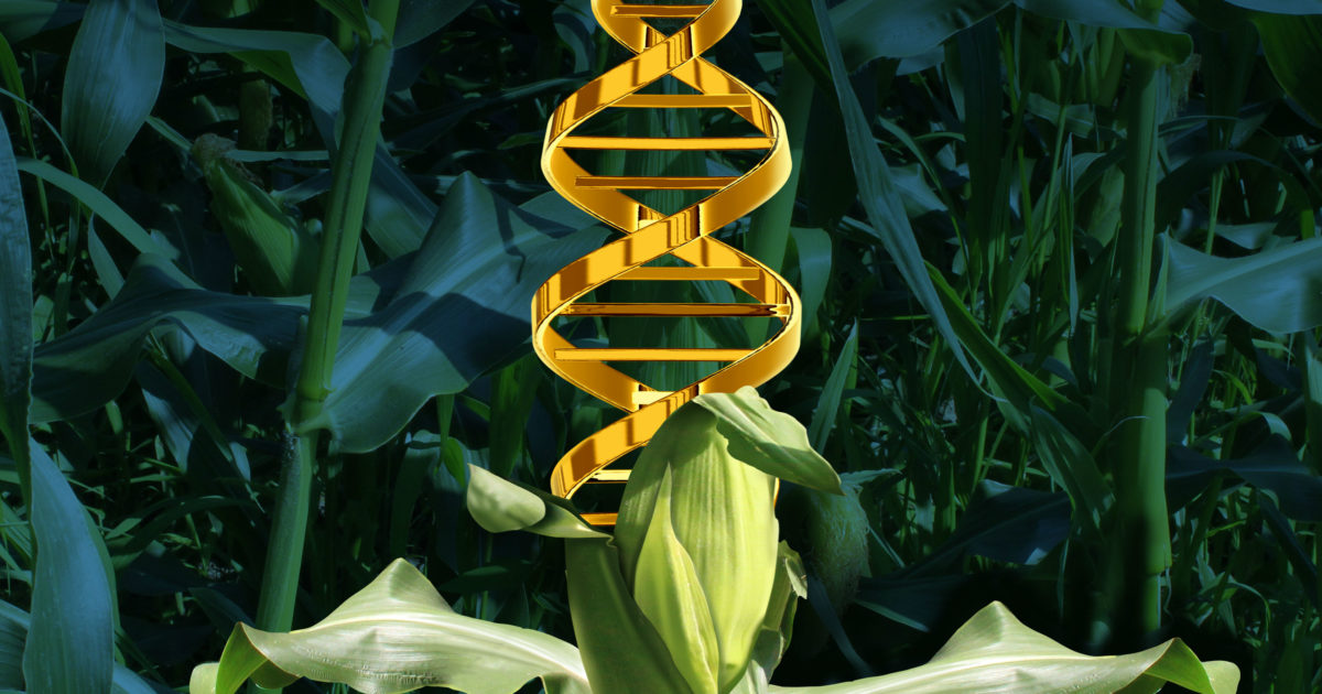 New Biotech Photosynthesis Hacks Would Boost Crop Yields by 50 Percent or More