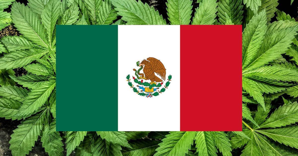 Losing patience with lawmakers, Mexico's Supreme Court orders permits allowing consumers to grow and possess marijuana – Reason.com