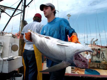 Ridiculous Rules For Swordfish Ceiling Fans Grain Barges
