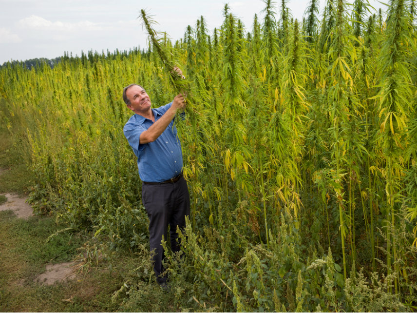 Congress Just Passed a Farm Bill That Legalizes Industrial Hemp